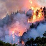 Un pirómano o el tendido eléctrico, dos hipótesis sobre el origen del gran incendio forestal de Gran Canaria